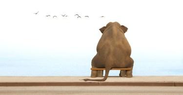 Funny Elephant Sitting On Bench