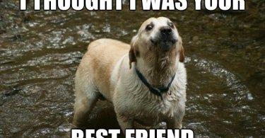 Best Friend Meme