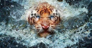 4K Tiger Wallpaper