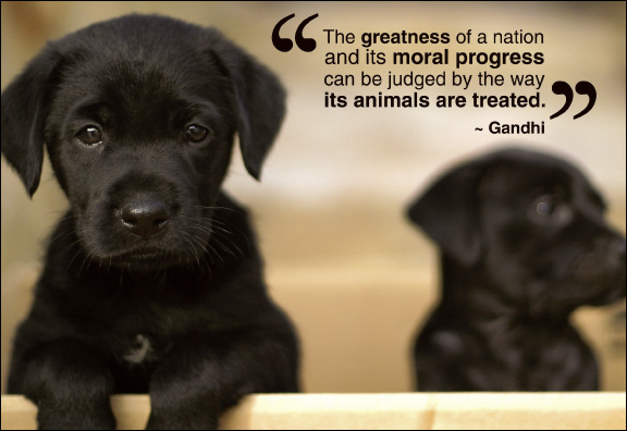 Animal Sayings The greatness of a nation and its moral progress can be judged by the way   Gandhi