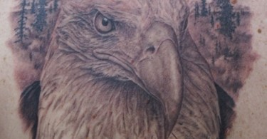 Eagle Face Tattoo In Wildlife Tattoo On Back Shoulder
