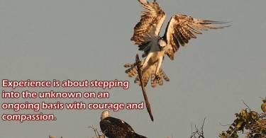 Experience Quotes  experience is about stepping into the unknown on an ongoing basis with courage and compassion