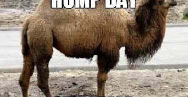 Hump Day Side Besrd Meme Graphic