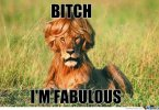 Lion Meme Bitch im fabulous