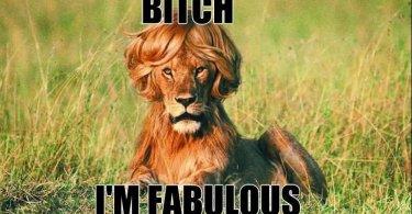 Lion Meme Bitch im fabulous