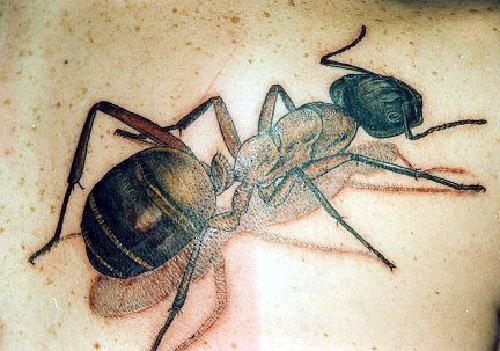 Ant Tattoos Idea Design for Tattoos Lover 46