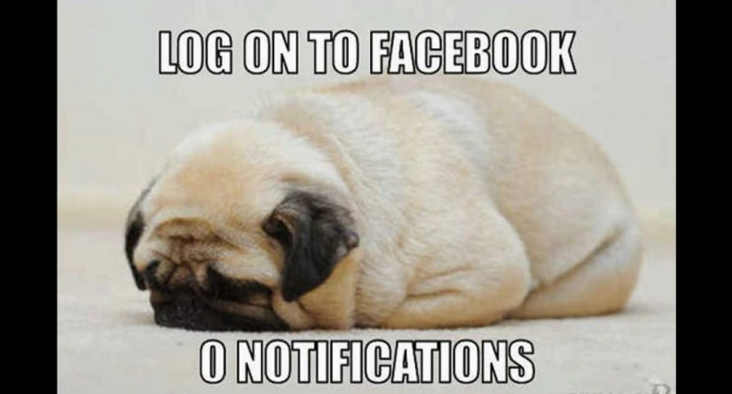 Pug Memes log on to facebook
