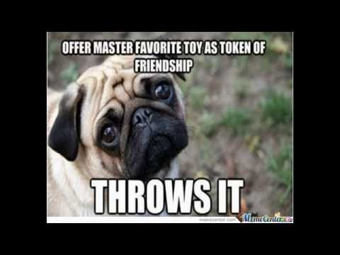 Pug Memes offer master favorite toy