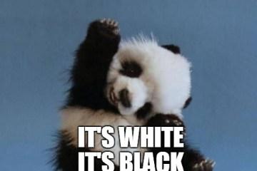 Panda Memes