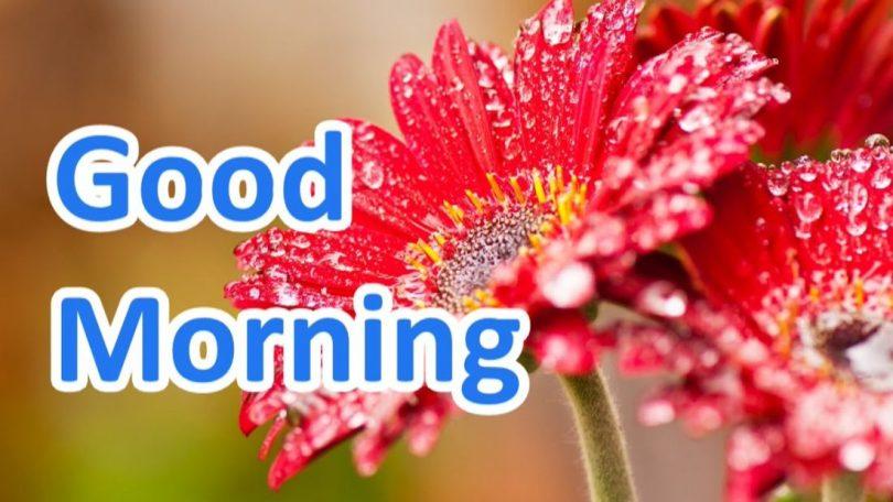 Friday Morning Quotes good morning