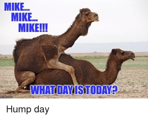 Amazing Hump Day Pictures mike mike mike !!! what day is today