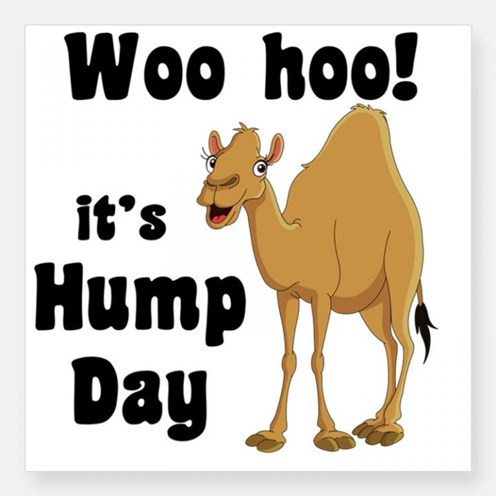 Amazing Hump Day Pictures woo hooo it's hump day