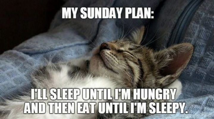 My Sunday Plan Ill Sleep Until Im Hungry And Then Sunday Meme