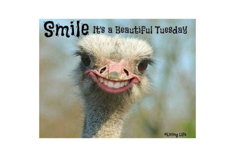 Smile Its a Beautiful Tuesday