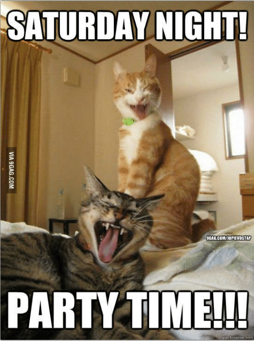 Sweet Saturday Memes Two Cats Party