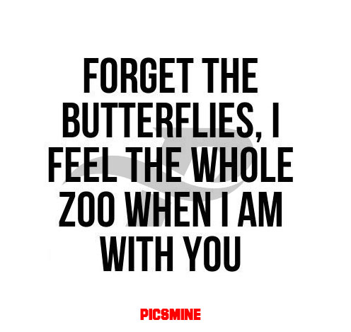 wcw captions forget the butterflies, i feel the whole zoo when i am with you