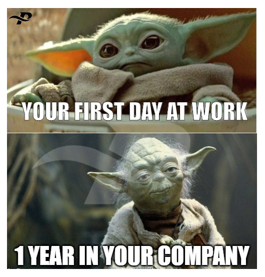 your first day at work 1 year in your company funny yoda memes