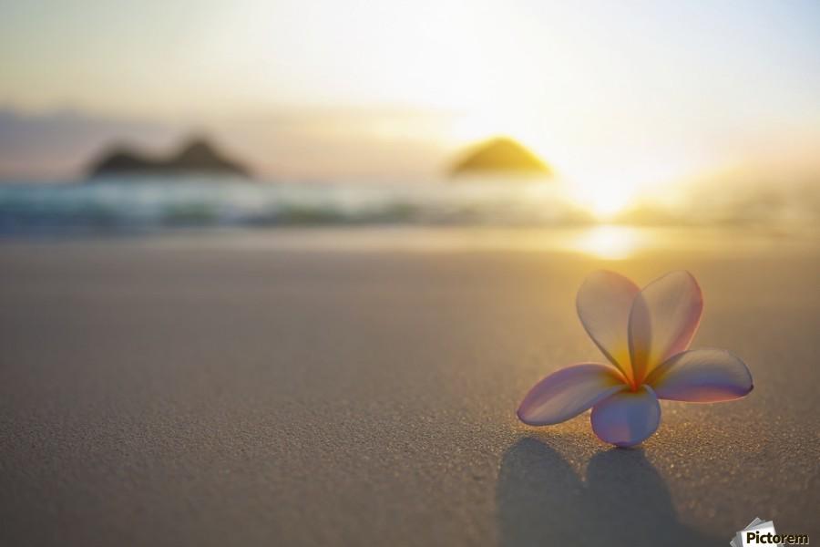 A Pink Plumeria Flower Sits On The Sand Of Lanikai Beach