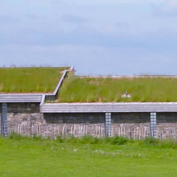 Economy Skyline Green Roof Meadow