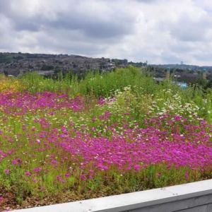 Green Roof Meadow Seeds