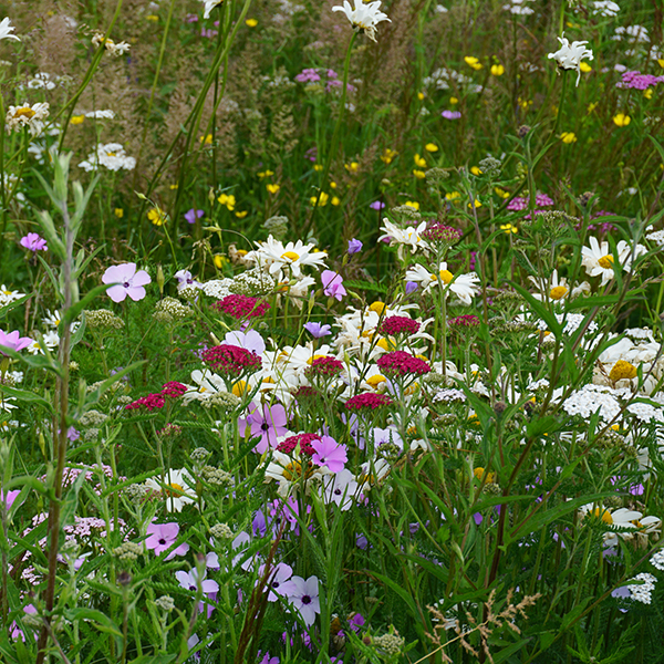 Patchwork Quilt Meadow