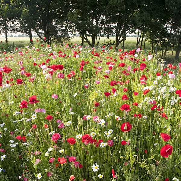 Remembrance Meadow