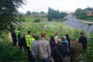 Councils and Universities Meet to Learn About Urban Meadows 7