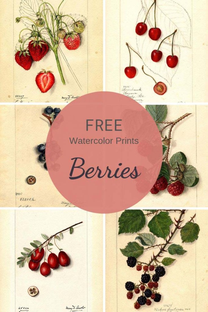 Fruit berry prints