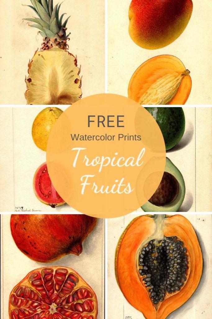Free tropical fruit prints