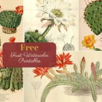 10 Beautiful Vintage Cactus Paintings to Download