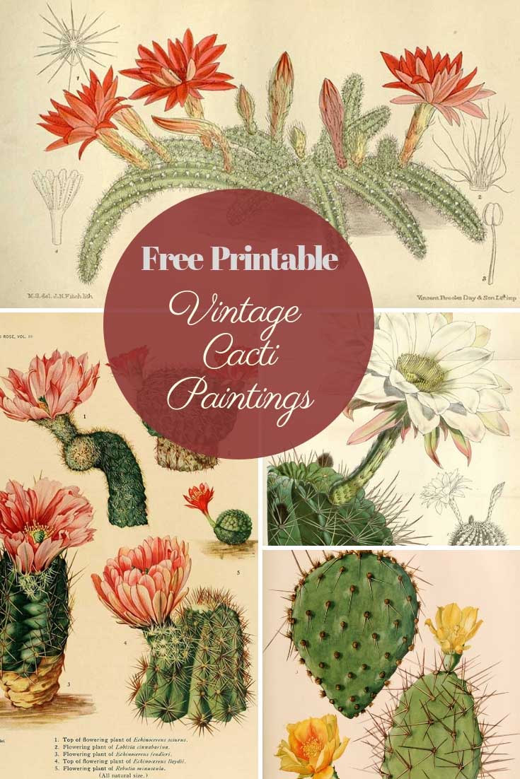 Free vintage cactus paintings