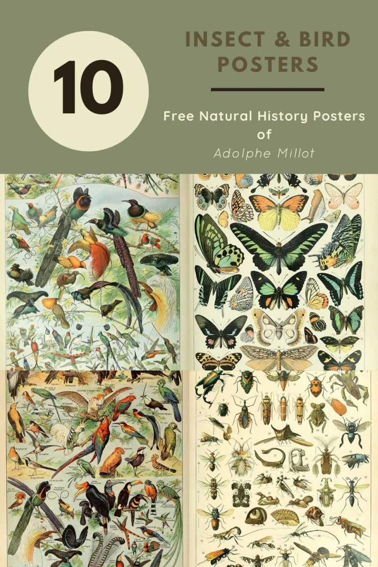 10 free insect bird natural history poster