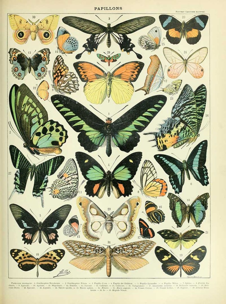 Vintage butterfly poster Adolphe_Millot_papillons