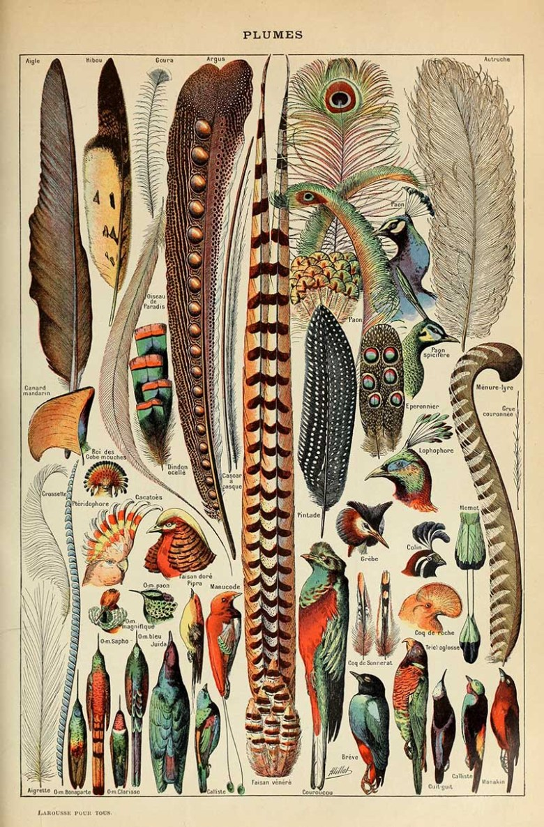 Natural history poster of plumes and feather paintings.