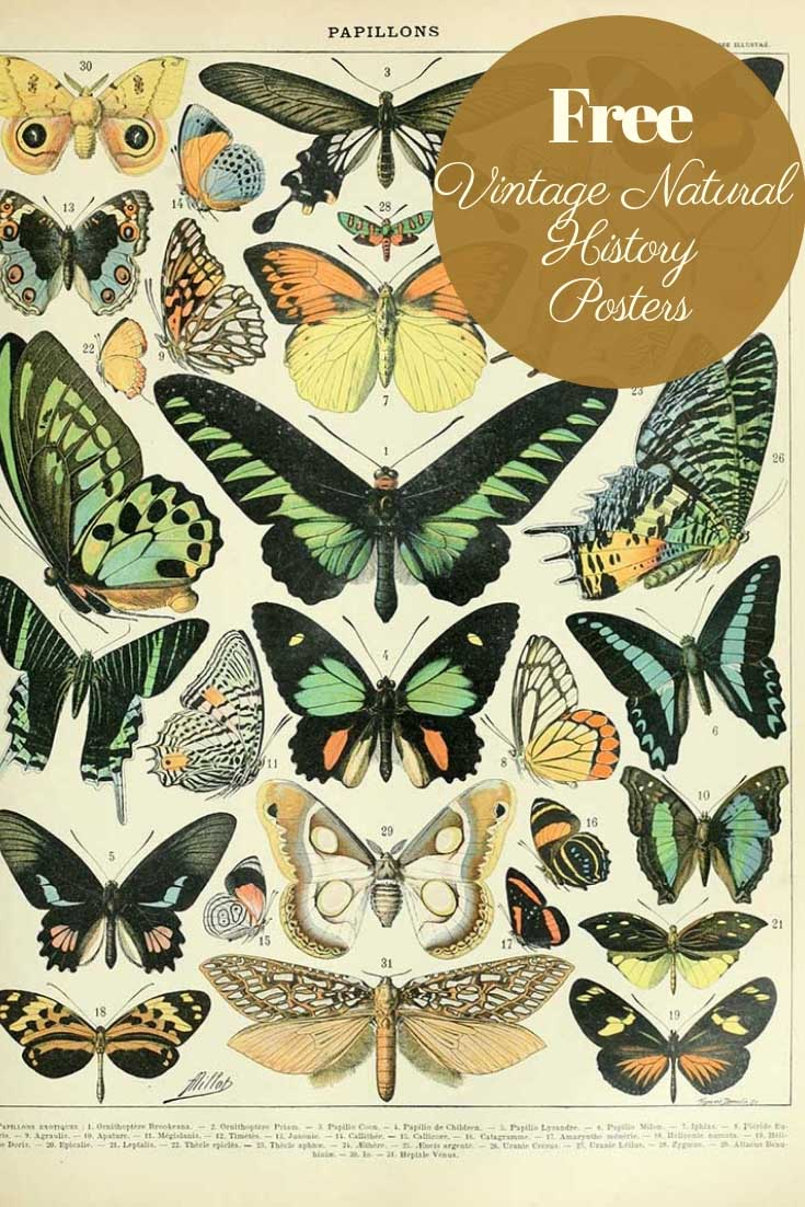 Free vintage natural history posters butterflies a