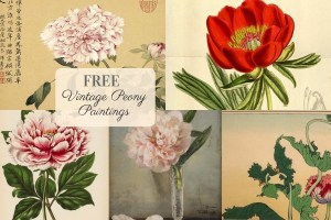 Free Vintage Peony Paintings to Download