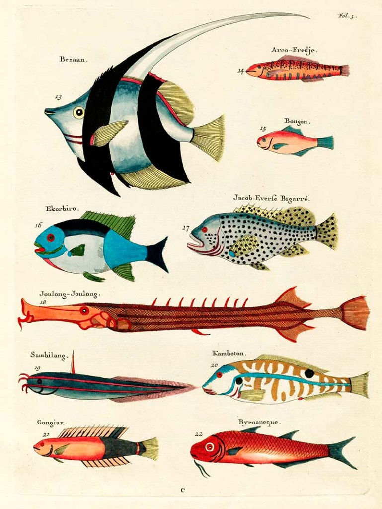 Fantastical fish 13-22