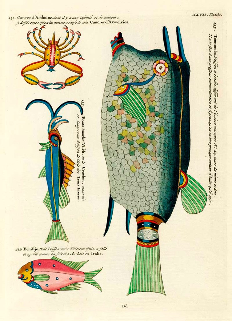 Antique fish drawings