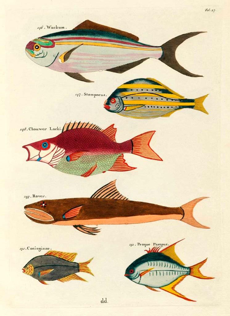 Louis Renard Fish