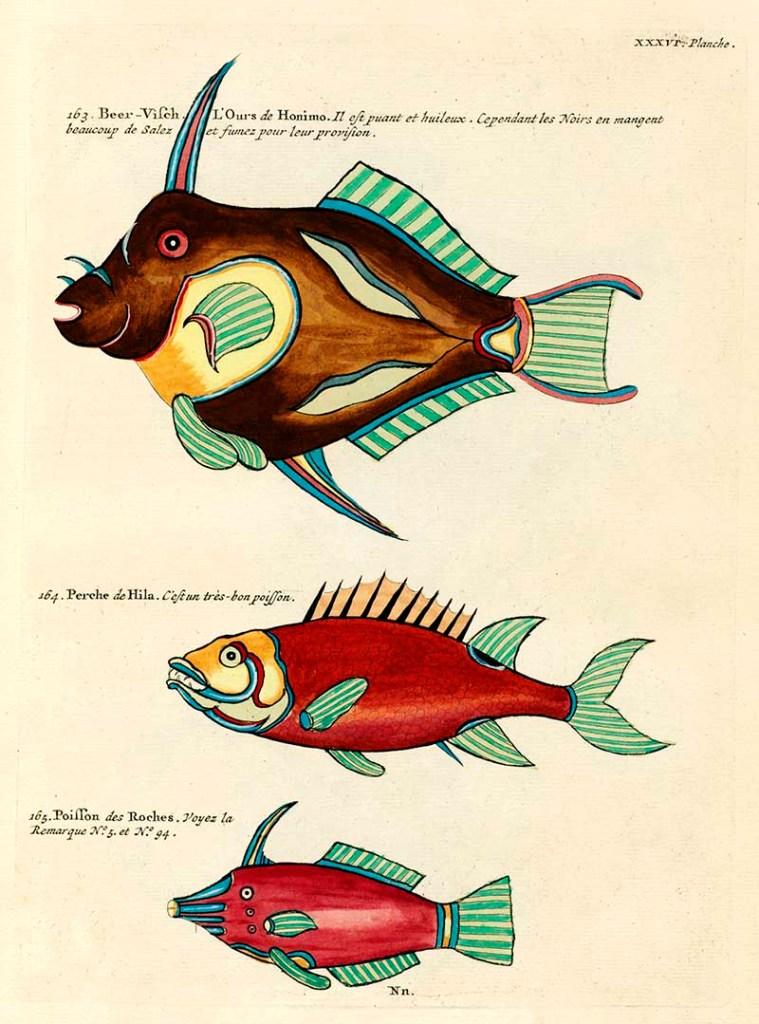 Louis Renard antique fish 163-165