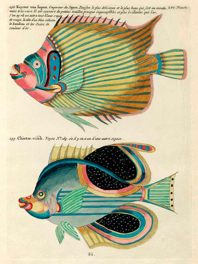 Louis Renard Fish 238 -239