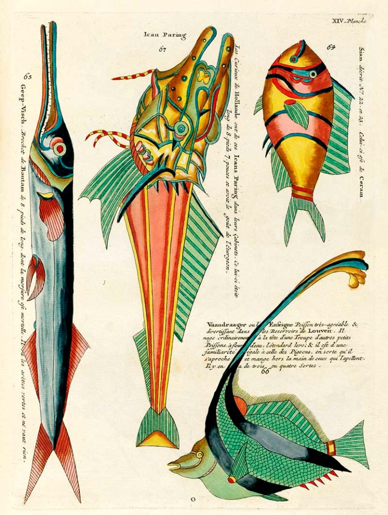 Vintage tropical fish