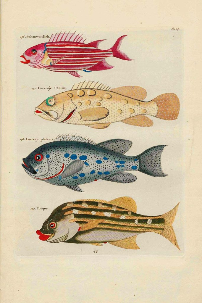 schouwerdick fish painting and others of Louis Renard free to download