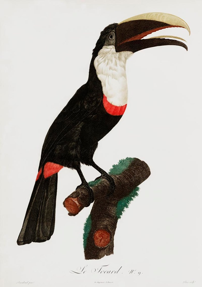 Magnificent Toucan paintings to download