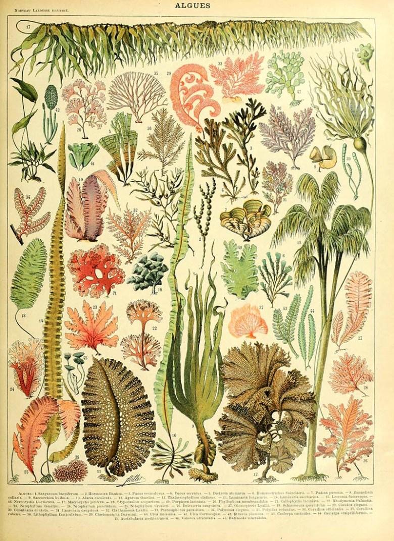 Algues Sea life poster