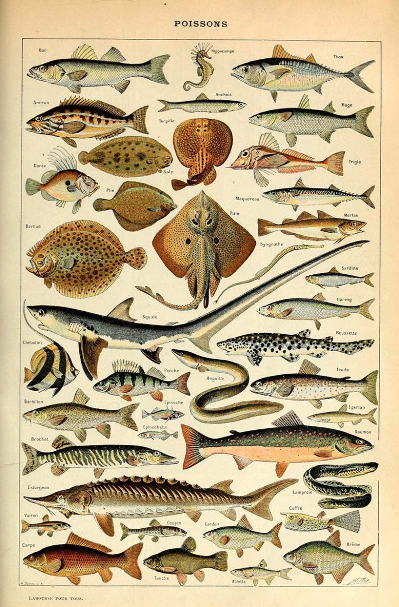 Fish identification print
