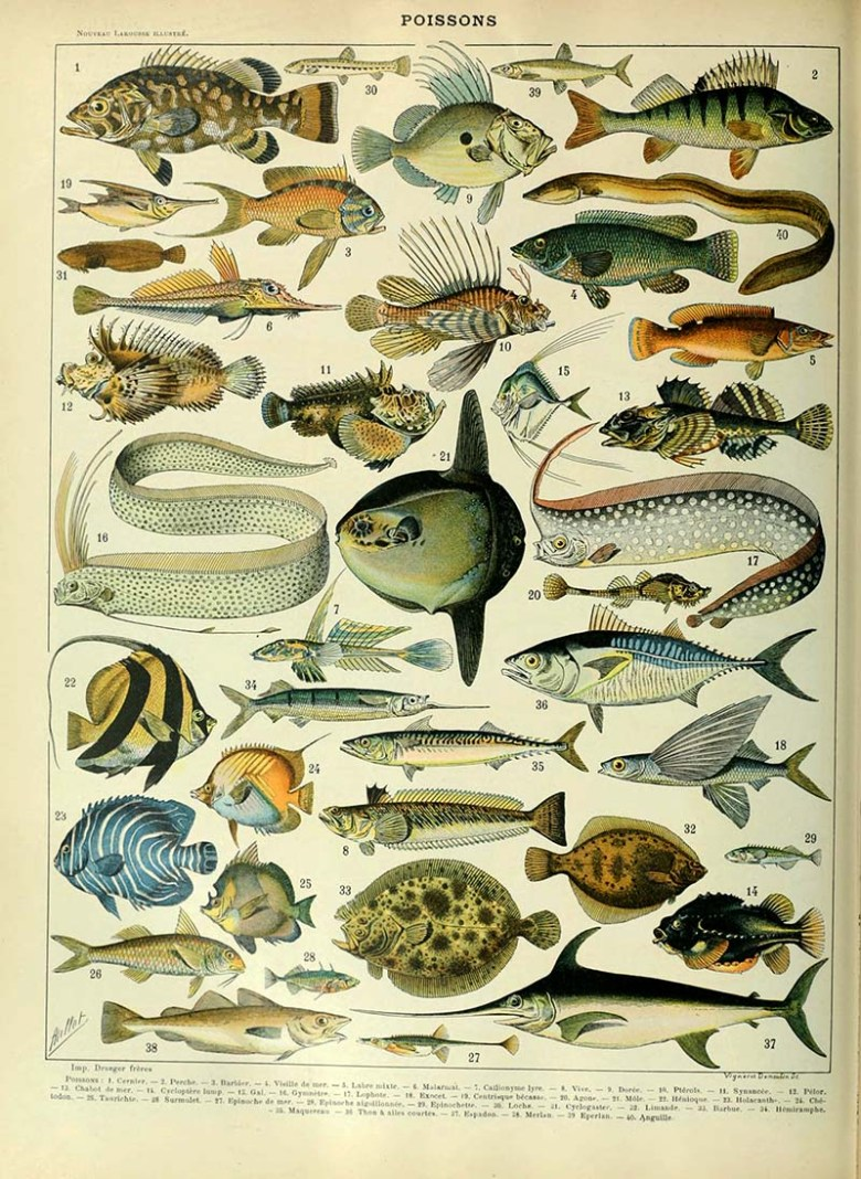 Fish identification marine life poster