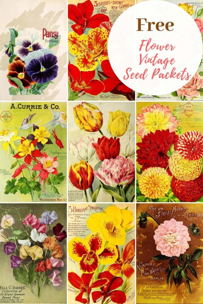 floral vintage seed packet art