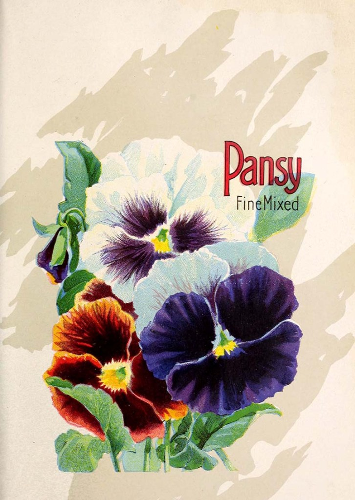 Pansy seed packet art