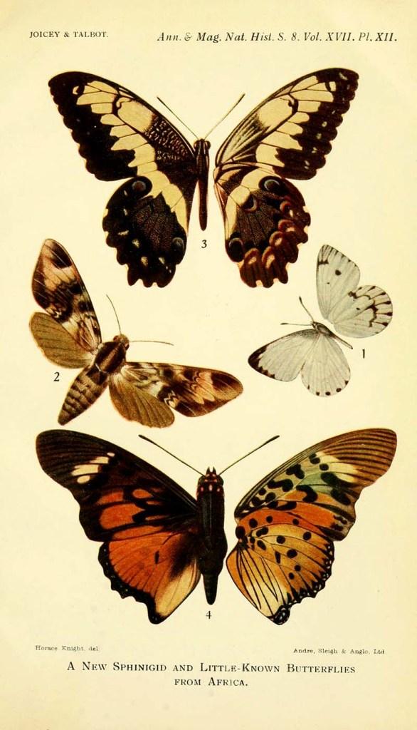 Little known African butterflies